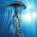 dna-over-jellyfish-copy